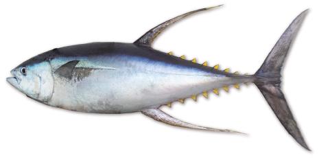 Atum-art