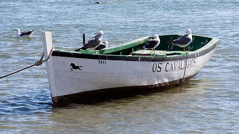 os-cavalinhos-1250x596