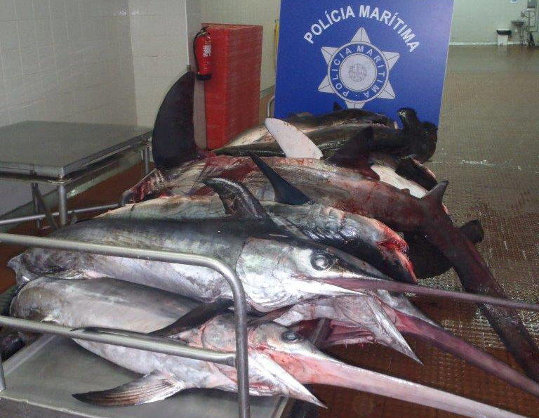 2-toneladas-pescado-acores2